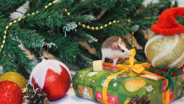 süße ratte in der nähe von weihnachtsbaum - kieferngewächse stock-videos und b-roll-filmmaterial