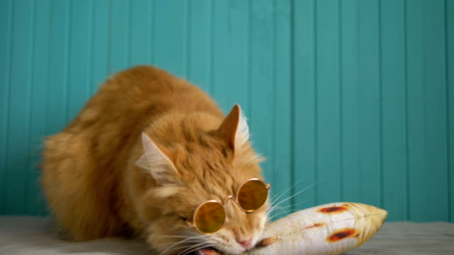 cute red cat in round sunglasses nibbles stuffed toy - vídeo