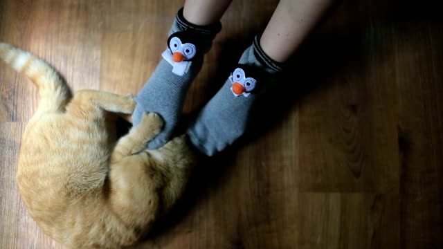 Cute red cat plays with girl in funny socks close up video