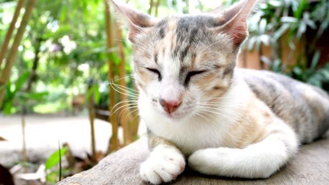 cute sleepy cat lying on wooden bench - кошка смешанной породы стоковые видео и кадры b-roll