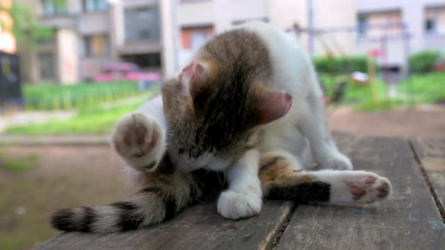 Cute, small cat licking her tail in public park