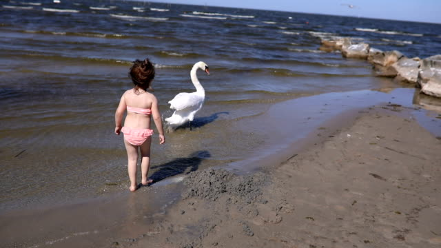 Cute toddler and a swan on a beach