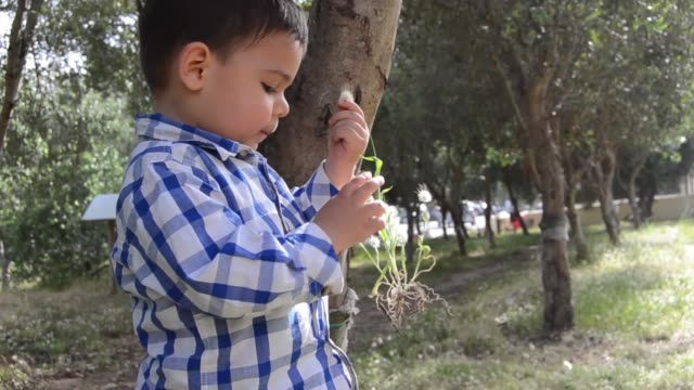 cute two years old playing with plants in the park - solo neonati maschi video stock e b–roll
