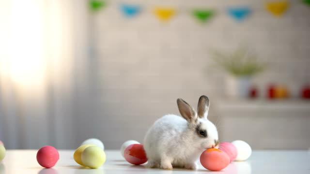 niedlichen weißen hasen mit ostern eier tisch, urlaub hintergrund, einladung zu spielen - osterhase stock-videos und b-roll-filmmaterial