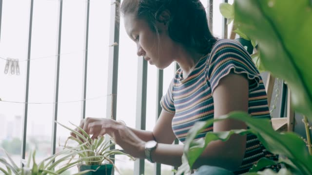 Cute woman taking care of her plants-stock VDO video