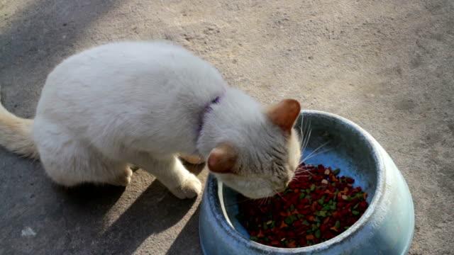 Cute yellow cat having meal video