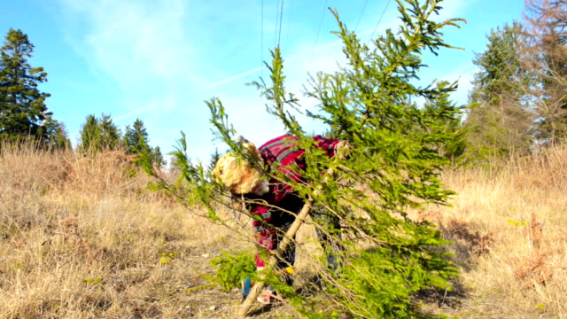 Cutting Christmas tree in forest video