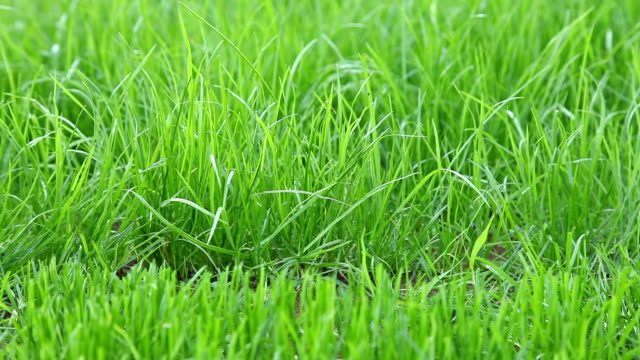 Cutting grass with mower video