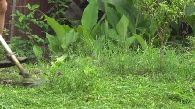 Cutting grass with mower Cutting grass with mower handle stock videos & royalty-free footage