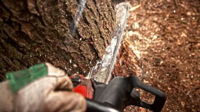 slo mo pov cutting into a tree with a chainsaw - motosega video stock e b–roll
