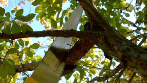 cutting the branch of a tree with a saw sawing branches in the garden hand saw gardening tree care limb body part stock videos & royalty-free footage