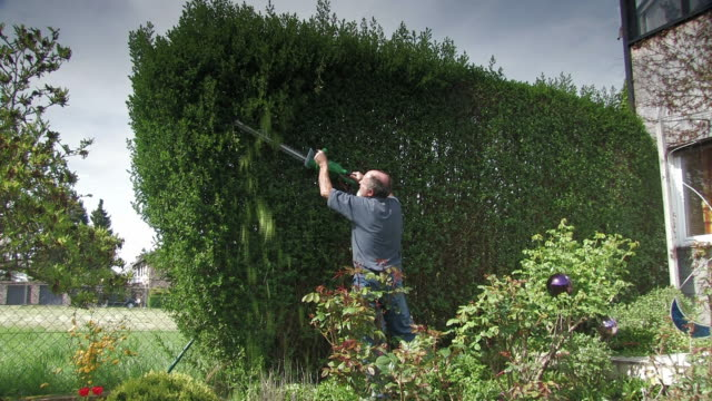 Cutting the hedge Other clips from this series: bush stock videos & royalty-free footage