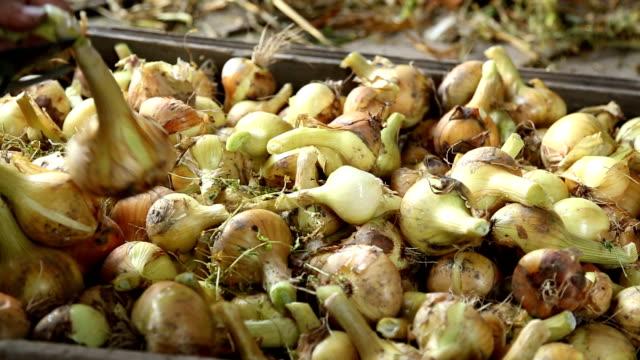 Cutting the onions Cutting the onions onion stock videos & royalty-free footage