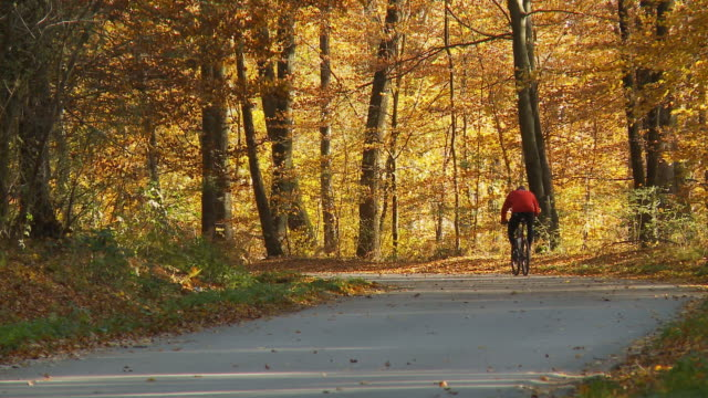 HD: Cycling In Colorful Autumn Forest video