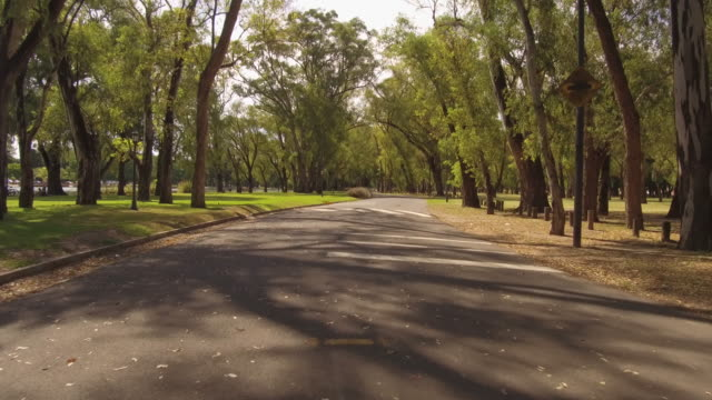cycling running driving through city park. person pov plate. sunny day, trees. - palermo città video stock e b–roll