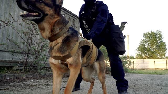 cynologist. un uomo in abiti militari con un cane da pastore addestrato - polizia video stock e b–roll
