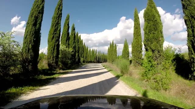 vídeos de stock e filmes b-roll de cypress countryroad in tuscany, italy - driveway, no people