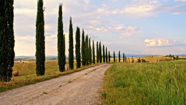ds cypress ağaç yol tuscan kırsalında - toskana stok videoları ve detay görüntü çekimi