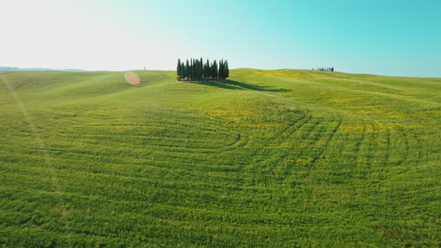 AERIAL Cypress trees among meadow in the Tuscany video