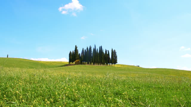 DS Cypress trees in the middle of a windy meadow video