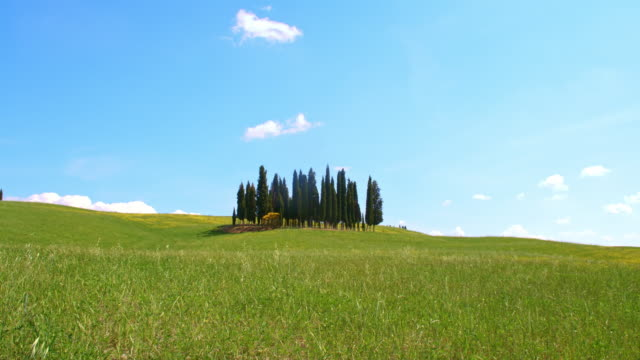 DS Cypress trees in the middle of meadow video