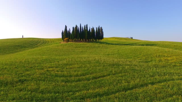 AERIAL Cypress trees in Tuscany video