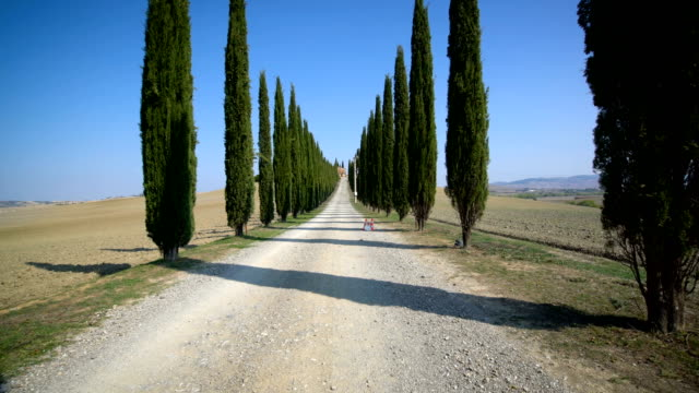 Cypress Trees Row along Tuscany Road - Driver POV