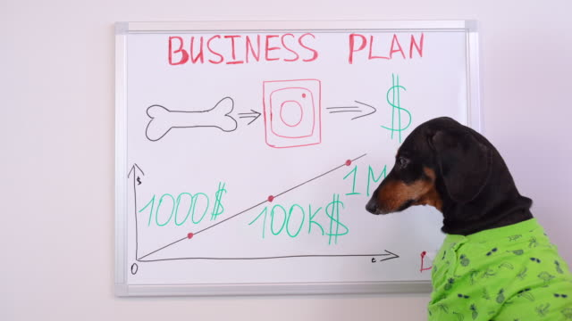Dachshund dog is studying a business plan drawn on a blackboard for increasing income and investing money and developing his business on the Internet