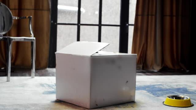 Dachshund dog sitting in cardboard box. Dog jumping out a cardboard box video
