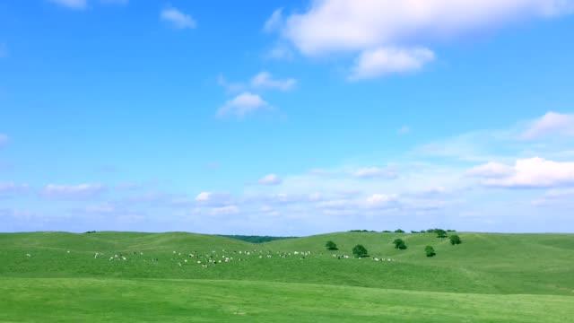 en mjölkgård i hokkaido, japan - hokkaido bildbanksvideor och videomaterial från bakom kulisserna