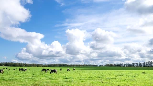 eine milchfarm in hokkaido, japan - ranch stock-videos und b-roll-filmmaterial
