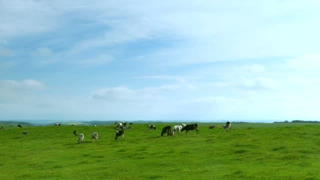 vídeos de stock e filmes b-roll de a dairy farm in hokkaido,japan - rancho quinta
