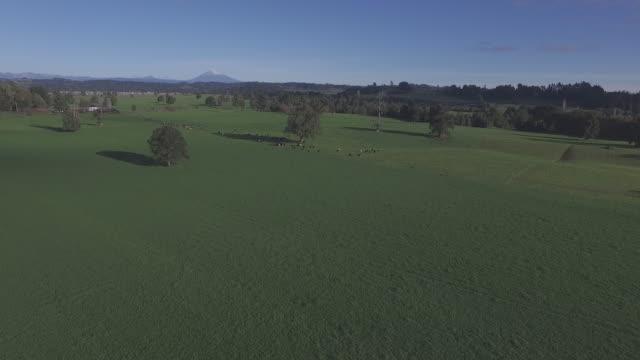 Dairy Farm Landscape video