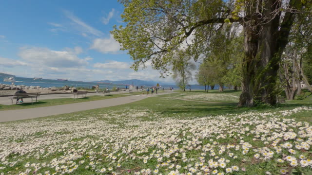 Video Daisies in the grass English Bay 4K UHD – April 25, 2020. People walk on the English Bay seawall in Spring.