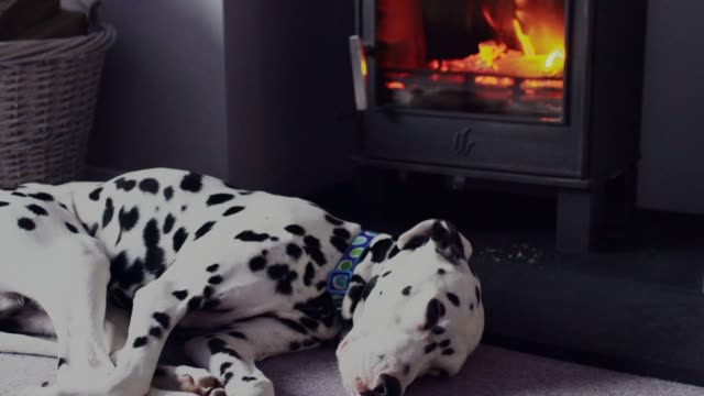 Dalmatian dog in front of a log burner