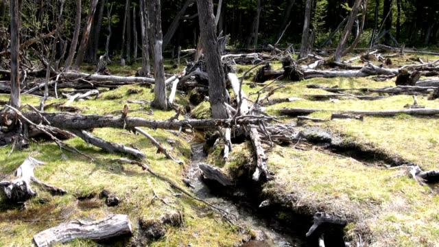 Les dommages causés à l'environnement et des forêts - Vidéo