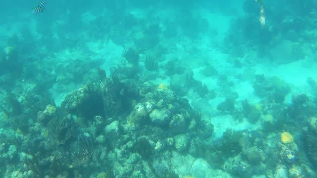 stockvideo's en b-roll-footage met beschadigd koraalrif dat neer op vissen kijkt die turken en caicos zwemmen - providenciales