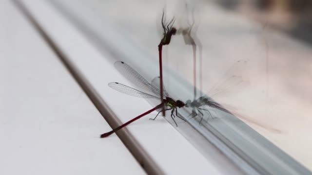 damselflies dragonflies insects video