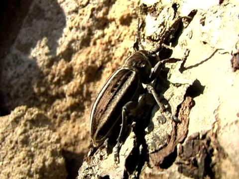dancing bug video