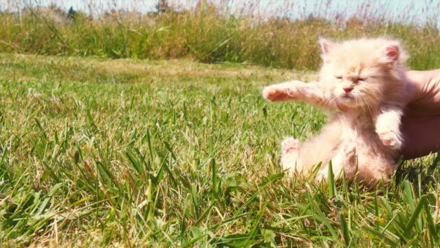 ダンスキトン - 子猫点の映像素材/bロール