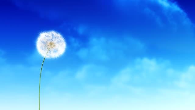 Dandelion Clouds video