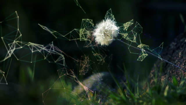 Dandelion, Freedom and Liberty Concept. video