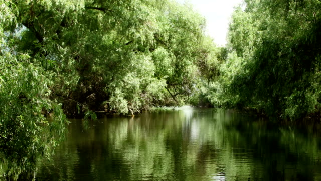 Danube delta forested wetlands in motion