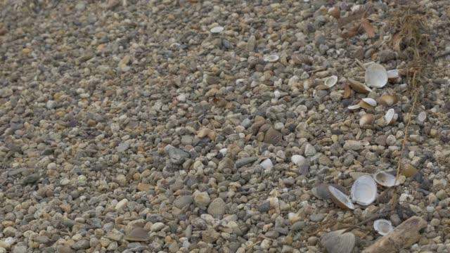 vídeos de stock e filmes b-roll de danube river beach with shells and plants 4k - bugio