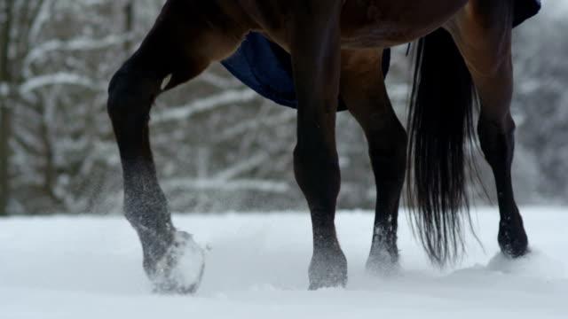 白い冬の深い雪の毛布の上を歩いてスローモーション: 暗い馬 - 動物に乗る点の映像素材/bロール