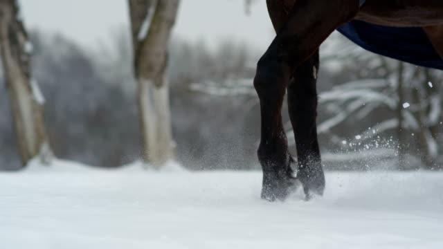 SLOW MOTION: Dark bay stallion walking on deep snow blanket in white winter video