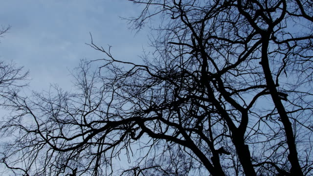 Bидео Dark branches of trees against the backdrop of a bright sky and clouds, contrast