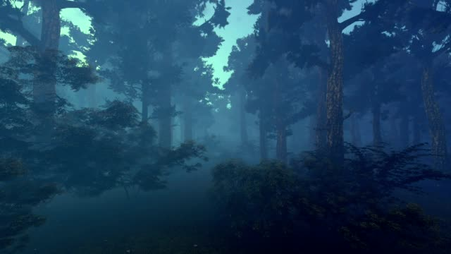 dark forest. 3d animation - trees in mist stock videos & royalty-free footage