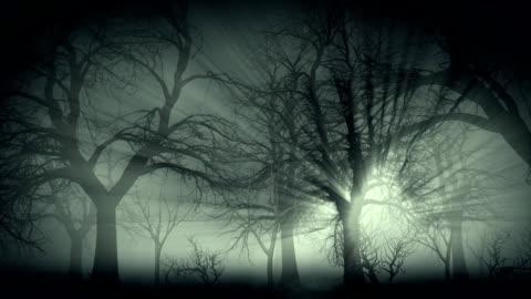 vídeos de stock e filmes b-roll de floresta escura com neblina - escuro