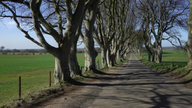 vidéos et rushes de sombres haies d'irlande du nord - haie